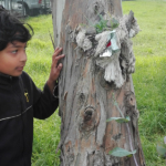 Nature Network - Eco Adventurers - Kids
