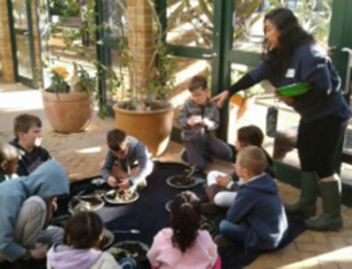 Winter Workshop: Indoor Waterwise Garden